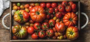 tomat heriloom