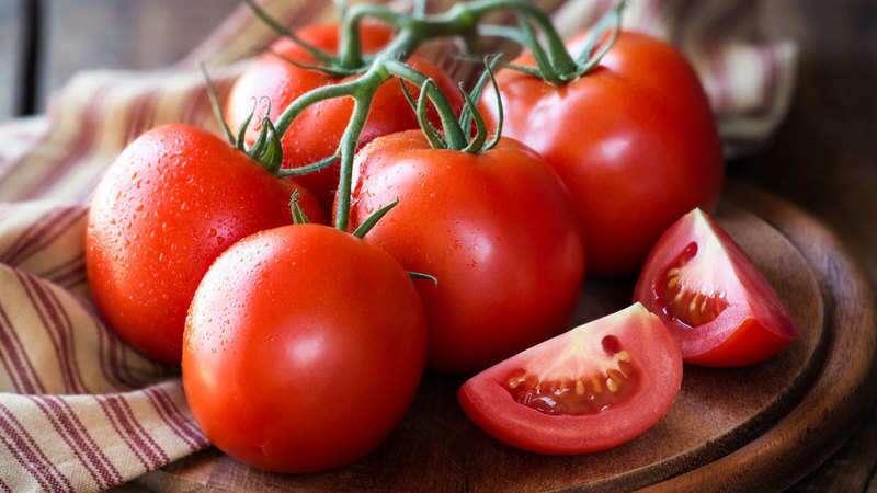fakta menarik tomat
