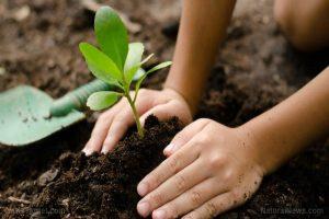 menanam kembali hutan-hutan