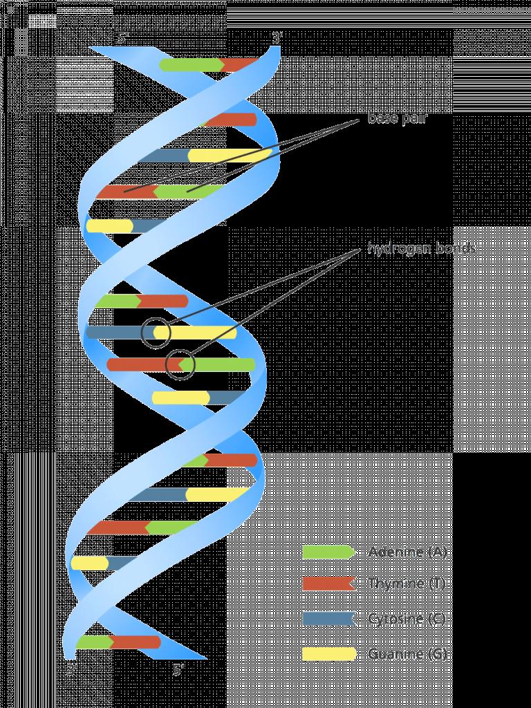 DNA adalah